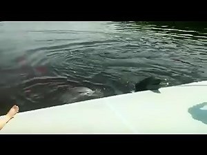 Rare video - Delfin abusa de madura