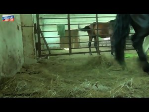 Active sex with a horse and Nadia by TeamRussia - Video de